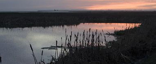 Arcata Wastewater Treatment Plant Uses Constructed Wetlands