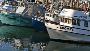 No California commercial salmon fishing season in 2009