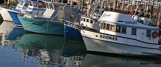 Will There Be a 2010 Salmon Fishing Season on the West Coast?