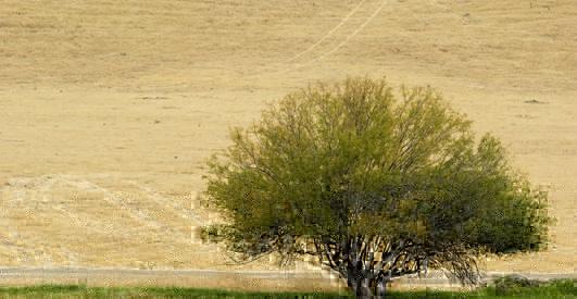 Dry Farm Field