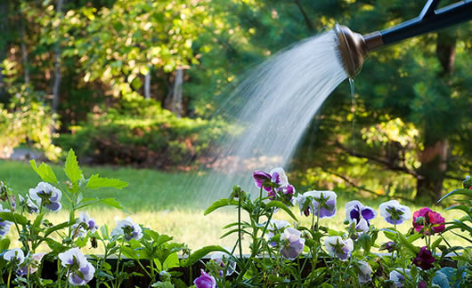 Water-Saving Garden Irrigation