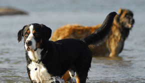 Four dogs die in Oregon from toxic algae in creeks