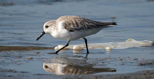 Atlantic Ocean's Plastic Patch Rivals Pacific Garbage Gyre