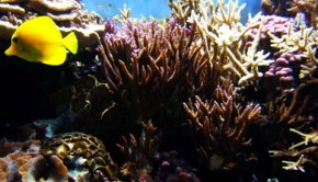Fish lose natural instincts to avoid predations as a result of ocean acidification.
