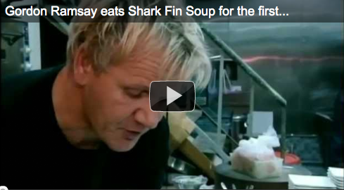 Gordon Ramsay Goes Shark (Fin) Hunting On Land