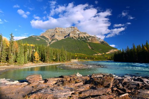 Athabasca River flows through the valley below Mount Kerkeslin of Jasper National Park in Canada