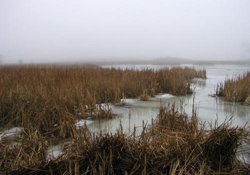 Water Bank Program to Reduce Flooding, Enhance Wildlife Habitat