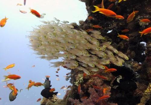 Improving Sustainable Fisheries