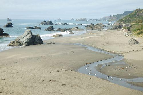 Oceans of Caffeine: Oregon Coastal Waters are Caffeinated