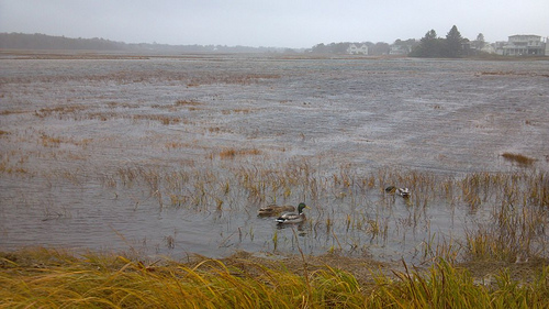 Hurricane Sandy Aftermath – Photo and Video