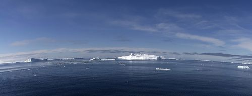 Melting of the Antarctic is Boon to Glass Sponges