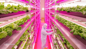 ge-reports-indoor-lettuce-farm-1
